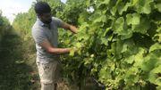 2018, une année exceptionnelle pour le vin belge?