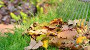 Pourquoi faut-il ramasser les feuilles mortes ?