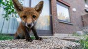 """Thomas Jean, photographe animalier en milieu urbain: """"La ville regorge d'une faune sauvage insoupçonnée"""""""