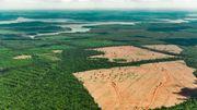 Moins de cuir au Brésil, plus d'arbres en Amazonie
