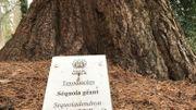 Les 125 arbres les plus représentatifs sont étiquetés