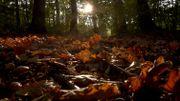 Ramassez les feuilles dans le jardin, une obligation?