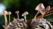 Tout savoir sur le monde fascinant des champignons