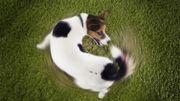 Un chien cherche parfois à attirer l'attention, Bénédicte Flament décrypte les raisons de certains comportements