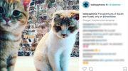 GB: Ed Sheeran ouvre un compte Instagram pour ses chats