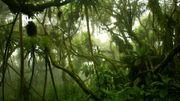 Ces forêts montagneuses d'Afrique qui stockent une quantité importante de carbone et disparaissent rapidement