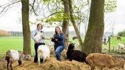 La Boutique Lush  à Louvain-la-Neuve se mobilise pour la protection des animaux de ferme et les chevaux