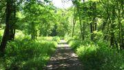 """""""Vert la Forme"""" : jogging et rando à la Baraque de Fraiture ce samedi 29 juin..."""