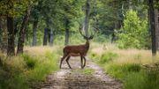En Europe, le nombre d'habitats naturels en mauvais état dépasse les 80%