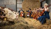 Récital pour cordes et bovins : quand des vaches sont élevées au son de la musique classique