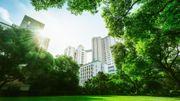 La méthode Miyawaki pour végétaliser et rafraîchir les villes