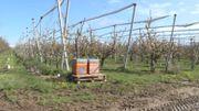 Pour les fruiticulteurs, les abeilles sont des partenaires de premier plan.