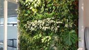 les murs végétaux- Plant Design