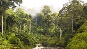 Les auteurs de l'étude ont comparé cette préférence pour la chaleur et l'humidité à la biodiversité des forêts tropicales humides de la Terre – en particulier par rapport aux zones plus froides et plus sèches.