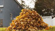 Les feuilles mortes, une mine d'or pour votre jardin !
