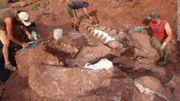 Le dinosaure découvert en Argentine fait partie des plus grands qui ont existé
