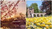 Évitez le monde au bois de Hal: admirez plutôt les fleurs dans ces deux parcs en Flandre