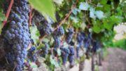 """Les vins """"nature"""" très présents à Bruxelles"""