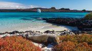 Les Galapagos rouvrent des sites et la réserve marine, fermés par la pandémie