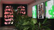 Plant Fever, l'expo qui révèle le potentiel caché des plantes