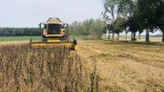 C'est la fin de la récolte qui a démarré début du mois d'août.