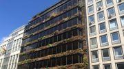 Le mur végétal de la rue Belliard, en 2016, brûlé pour la deuxième fois depuis sa création, en 2010. Depuis, son état s'est encore dégradé, il n'y a tout simplement plus de plantes.