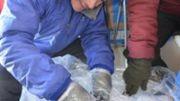 L'énorme météorite de l'Antarctique reste définitivement au Museum des Sciences Naturelles