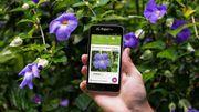 Recrudescence des empoisonnements par plantes vénéneuses