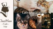 ChatMan Café : le bar à chats