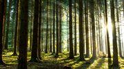 Plongée au cœur de la forêt, si belle dans sa parure automnale