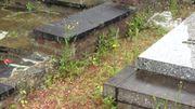 Les mauvaises herbes poussent entre les tombes