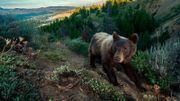 La vie des ours
