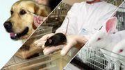 """Éléonore : """" Les gens qui soutiennent la recherche médicale sur des animaux sont des criminels ! """""""