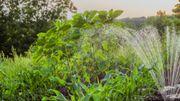 Saviez-vous que les plantes pouvaient se faire de petites camarades ?