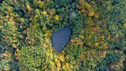 Pourquoi la forêt russe est essentielle pour lutter contre le réchauffement climatique?