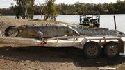 Chasse à l'homme en Australie après la mort d'un crocodile de 5 mètres de long
