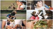 Quel animal adopter selon votre situation familiale et votre disponibilité ?