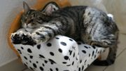 Pets Tunes, une playlist antistress pour chiens et chats