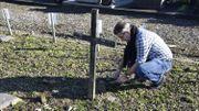Thierry Delplancq tente de préserver le petit patrimoine funéraire dans un cimetière à Haine-Saint-Pierre.