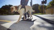 Les chiens peuvent apprendre à détecter les crises de diabète