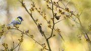5 oiseaux à observer dans la Réserve Naturelle du Haut-Geer