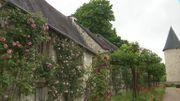 Le jardin du château du Rivau et ses roses parfumées