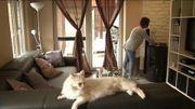 Des pellets de chauffage comme litière pour chat, un vrai bon plan?