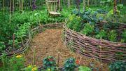 Optimiser son potager en associant les bons légumes entre eux