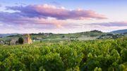 Beaujolais Nouveau: 4 clichés sur le vin qu'il ne faut pas écouter