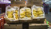 """Les producteurs antillais lancent une """"banane équitable"""""""