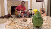 """Led Zeppelin : un perroquet reprend """"Stairway to Heaven"""""""