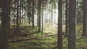 Plus de 40% des espèces d'arbres menacées d'extinction en Europe