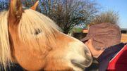 """Hippothérapie : """"Ce n'est pas le thérapeute qui est thérapeute, ni le cheval, c'est la relation"""""""