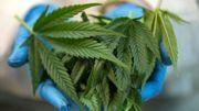 Cannabis thérapeutique : à quand une législation moins floue ?